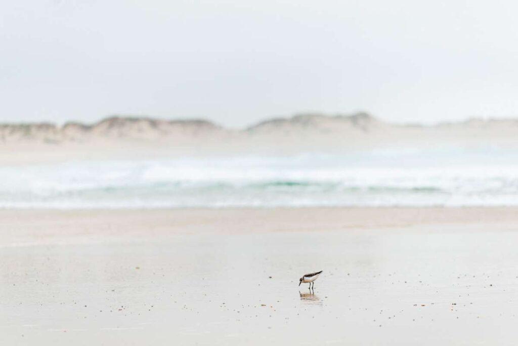 Post corona holiday Surf Atlantic